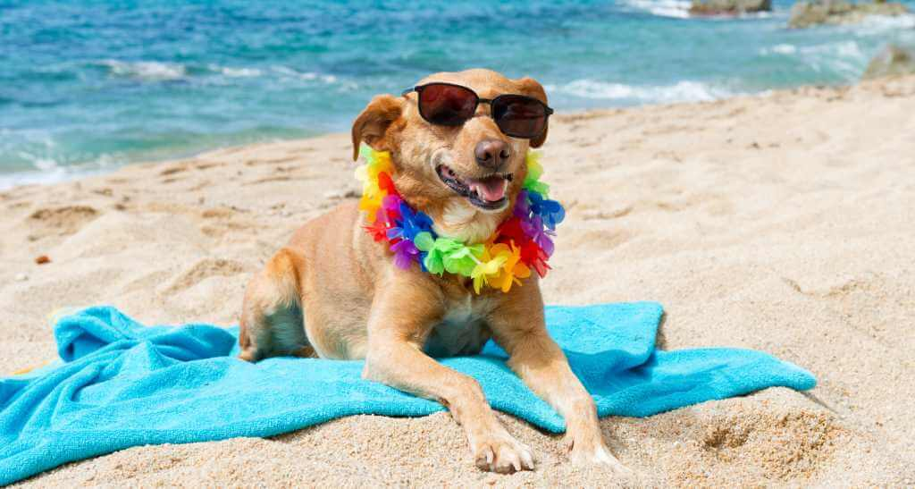 Beach Safety for You and Your Dog