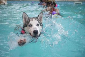 Chlorine and Your Dog